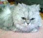 家庭医学のメールマガジン:循環器内科Dr.Iの愛猫ぶーにゃん